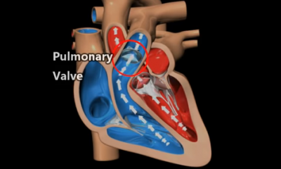 how heart works